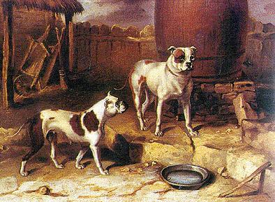 Bulldogs omstreeks 1850