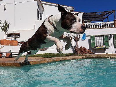 Dock diving